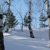 Зимой в лесу... :: Елена
