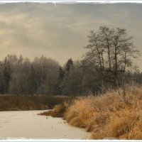 На берегу реки Ухтохмы... :: leonid