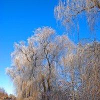 Дерева :: Александр Бойко