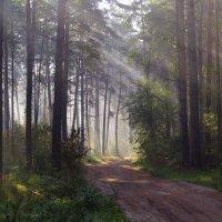 Волшебный лес :: Ната Волга