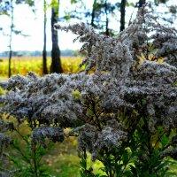 осенние цветы :: Александр Прокудин