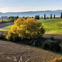 Autumn in Tuscany :: Dmitry Ozersky