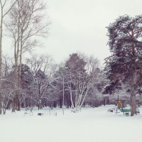 Зимний парк :: Сергей Журов
