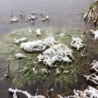 On the pond :: Sergey Sergaj