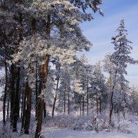 Зимний лес :: Наталия Григорьева