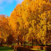 Золотая осень. :: Алексей Жуков