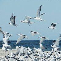 Seagulls :: Кристина Лысенко