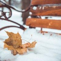 Я по первому снегу бреду... :: Ольга Воронина