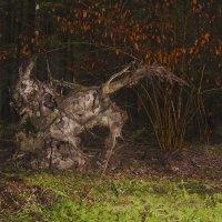 Лесной краб :: Rabbit Photo