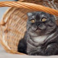 Кот.Его величество. :: Юлия Москалькова