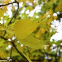 Осень :: Анна Окунева