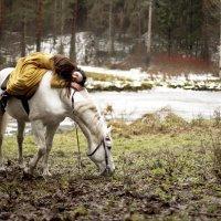 Зимние сказки волшебного леса. :: Igor Veter