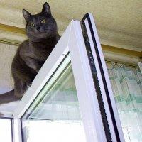 Любимый  наблюдательный пункт - под  потолком.... :: Валерия  Полещикова