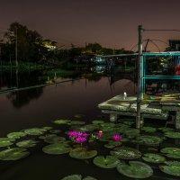 Бангкок :: gegemoon