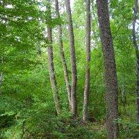 В лесу :: Виктор Шандыбин