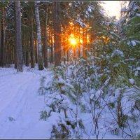 Декабрь в Сибири :: Владимир Холодный