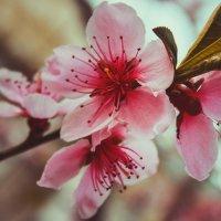 весна :: Любовь Береснева