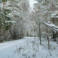 По зимнему лесу :: Милешкин Владимир Алексеевич
