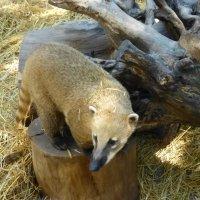 Ялтинский зоопарк «Сказка» :: Наиля