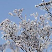 зима пришла :: Екатерина