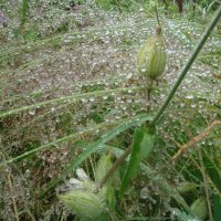 кружево дождя :: helga 2015