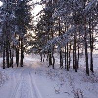 Лыжня в закат :: Наталия Григорьева