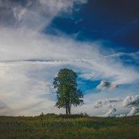 Дерево и Небо :: Дмитрий
