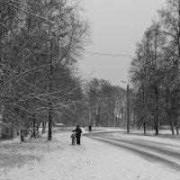 Дорога в зиму... :: Елена Миронова
