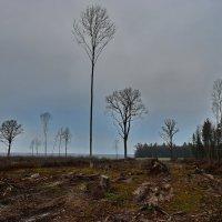 Здесь  был  лес. :: Валера39 Василевский.