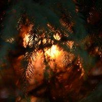 Декабрьское солнце :: Мария Панькина