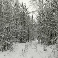 Лес,сумерки..зима.. :: Галина Полина