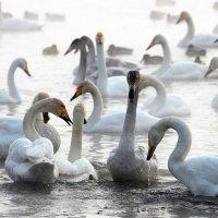 Морозный туман над озером :: И.В.К. ))