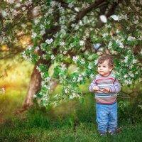 Когда яблони цветут... :: Александр Николаев