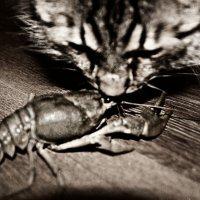 Любопытство не порок........... :: Любовь Космачева