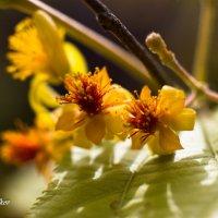 Желтый цвет :: Николай Волков