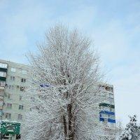 Зимний наряд :: Татьяна