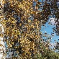 Осенний ветер :: Фотогруппа Весна.