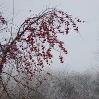 Яркий штрих в белой зиме. :: nadyasilyuk Вознюк