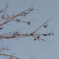 зимние яблоки :: Мария Букина