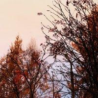 Осень. :: Anya Elebaeva