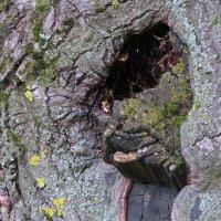 На стволе дерева :: Вера Щукина