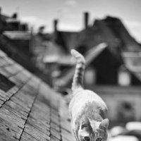 Коты Питера :: Николай Макаренков