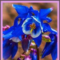 Цветик семицветик. :: юрий Амосов