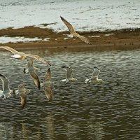 И чайки играют в салочки -:))) :: Александр Запыленов