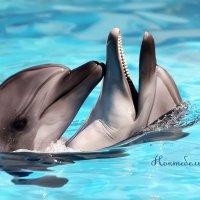 дельфины :: лада шлёнова