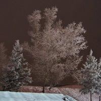 Зима в городе :: Виктор Четошников