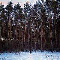 Зима :: Алина Земцова