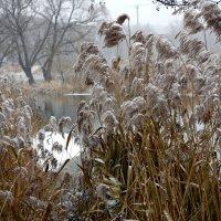 Природа в декабре. :: Oleg4618 Шутченко