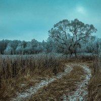 дорога в зиму :: Алексей Кошелев