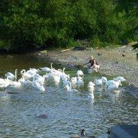 Река Влтава в Праге :: Наиля